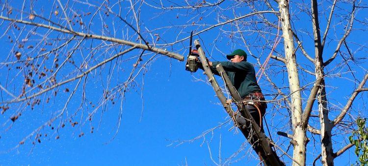 Faire appel à une entreprise pour élaguer les arbres